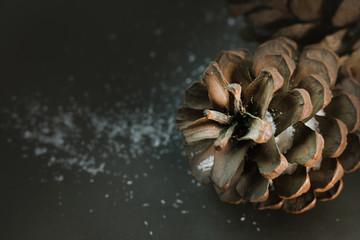 Pine cones on black image background.