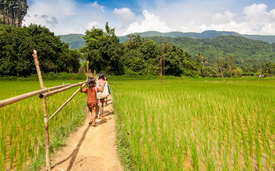 Rear view of Local Students are walking on ridge rice field to go to rural school in morning time.