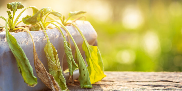 Dead plant or vegetable in plastic bottle on wooden table with sunlight in morning time