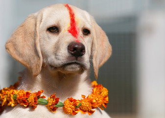 """A puppy with """"Sindoor"""" vermillion powder on its forehead and a garland is pictured after a boy offered prayers during the dog festival as part of Tihar, celebrations in Kathmandu"""