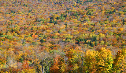 autumn mountain forest with colorful trees as nature background