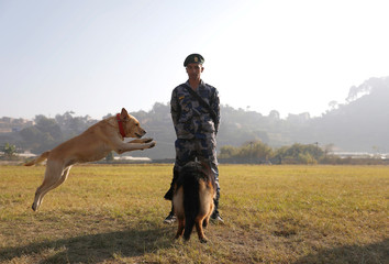 A member of Armed Police Force observe while a dog performs a trick during the dog festival as part of Tihar, celebrations also called Diwali, in Kathmandu