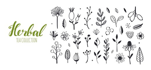 Herbal tea and floral doodle set. Vector hand drawn