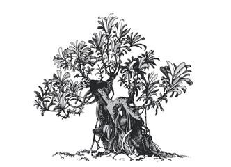 Bonsai tree. Schefflera, drawing ink .