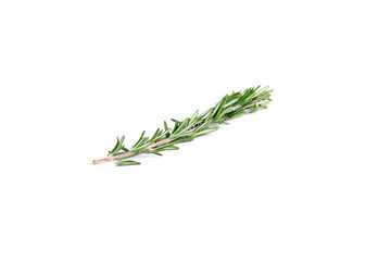 A sprig of delicate rosemary on white