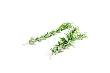 Isolated sprigs of rosemary on white