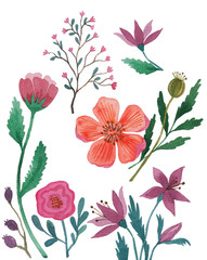 Set of watercolor flowers. Flowers, leaves, roses and poppies