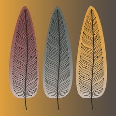Hand drawn feathers set. Сolorful Vector illustration.