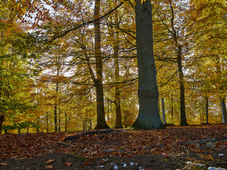 Autumn forest scenery with leaves changing colors