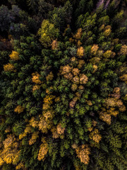 Drone Aerial forest in Autumn