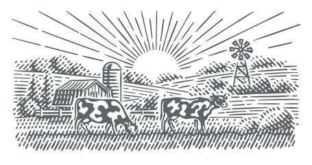 Cows grazing in a farmland landscape engraving style illustration. Vector, isolated.
