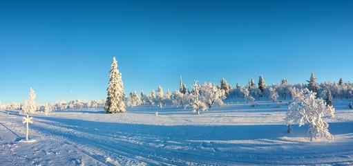 Wall Mural - Snowy panorama, frozen trees in winter in Saariselka, Lapland, Finland