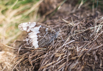 butterfly over wood in forest