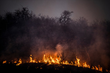 Bushveld fire and flames