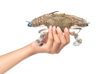 hand holding fresh crab isolated on white background.