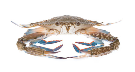 fresh crab isolated on white background.