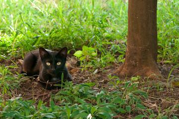 black cat in the garden