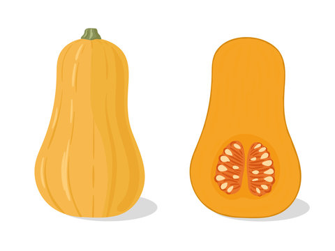 vector, print, background, illustration, art, graphic, design, isolated, hand drawn,   food, cuisine, cooking, eat, squash, butternut, butternut squash, fruit, fall, autumn, agriculture, garden, harve