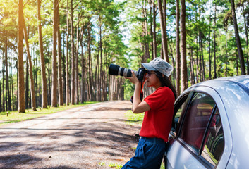 Asian woman take a photograph in pine forest.