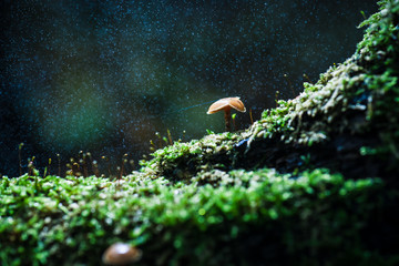 Rainy day in the autumn forest with falling raindrops and shiny water drops on a lighted mushroom