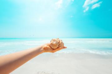 Closeup on sea shell in hand of woman on seashore