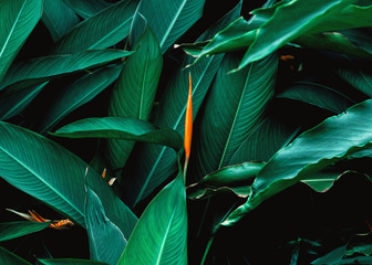Dark green leaf with flower in tropical jungle nature background