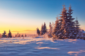 Larch and fir trees covered with frost at sunrise on the slope in Tatranska Lomnica, popular travel destination and ski resort in Slovakia