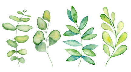 Watercolor mistletoe and eucalyptus leaves
