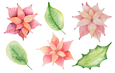 Watercolor Christmas poinsettia flowers and leaves illustration