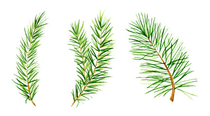 Watercolor set spruce branches Hand drawn illustration