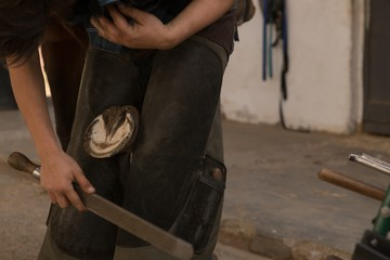 Woman putting horseshoes in horse leg