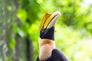 Close-up picture of hornbill