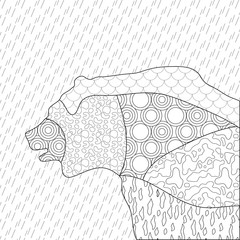 Bear antistress coloring. Black and white drawing for decoration, printing and coloring.
