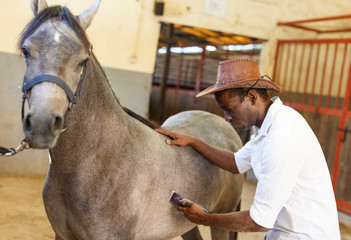 Man shearing gray horse with trimmer