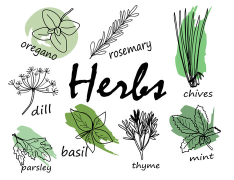 Hand drawn herbal elements. Vector set