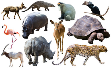 Collage with African mammals and birds