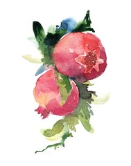 Pomegranate watercolor painting art illustration on white background.