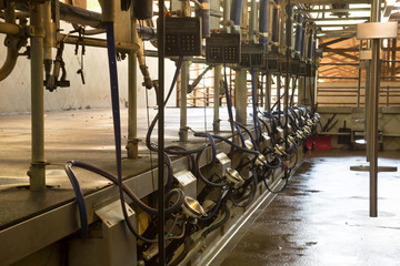 Automated milking line