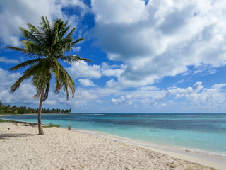 Palm trees on a tropical beach (Saona Island, Domenican Republic), Beautifull Beach with white sand of a typical tropical island of the caribbean
