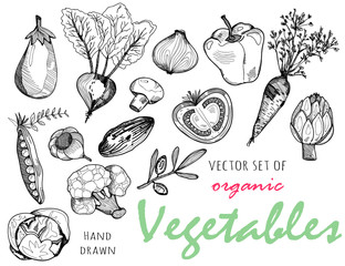 Hand drawn graphic vegetables. Vector set