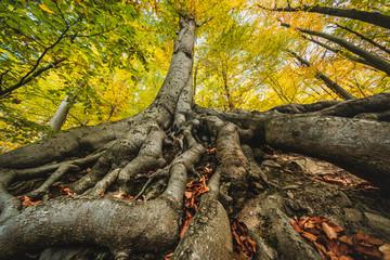Wurzel und Baum