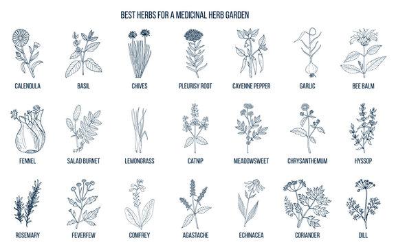 Best herbs to grow in your medicinal garden