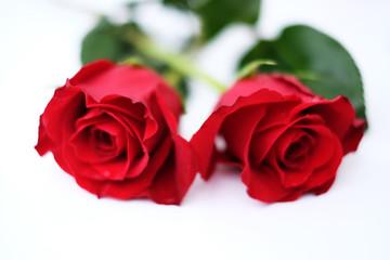 Zwei rote Rosen vor weissem Hintergrund
