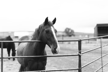 Horse Standing at Fence at Oregon Ranch