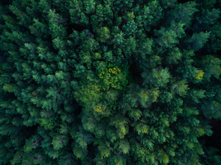 Aerial scene of the green woods of high mountains.