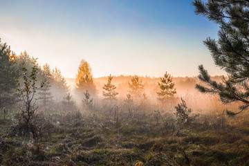 Summer landscape of dense fog early in the morning in the woods