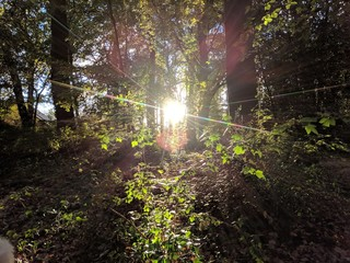 sun shines trough leaves and trees