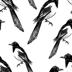 Seamless background of magpie sketches