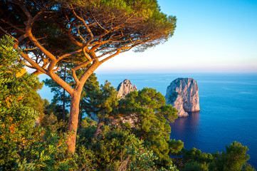 Scenic Mediterranean landscape with pine tree standing above dramatic Faraglioni Rocks in golden sunset light on the island of Capri, Italy