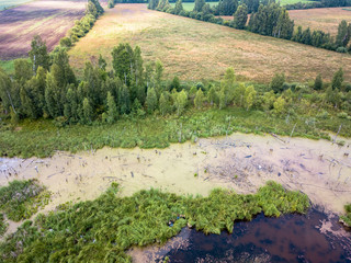 Aerial Drone Photo of the Countryside Forest, Top Down View in Sunny Summer Day